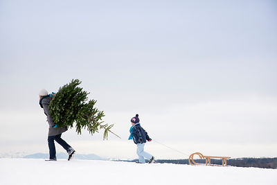 Mother and son carrying christmas tree