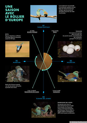 One year with the European Roller at Silences du Ventoux