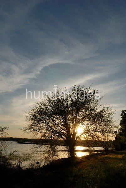 Silhouette of tree in front of lake (vertical) at sunset