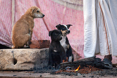 Stray dog puppies sit by a human-made fire to stay warm, on the ghats in Varanasi, India.