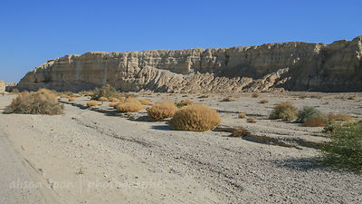 Landscape of the desert