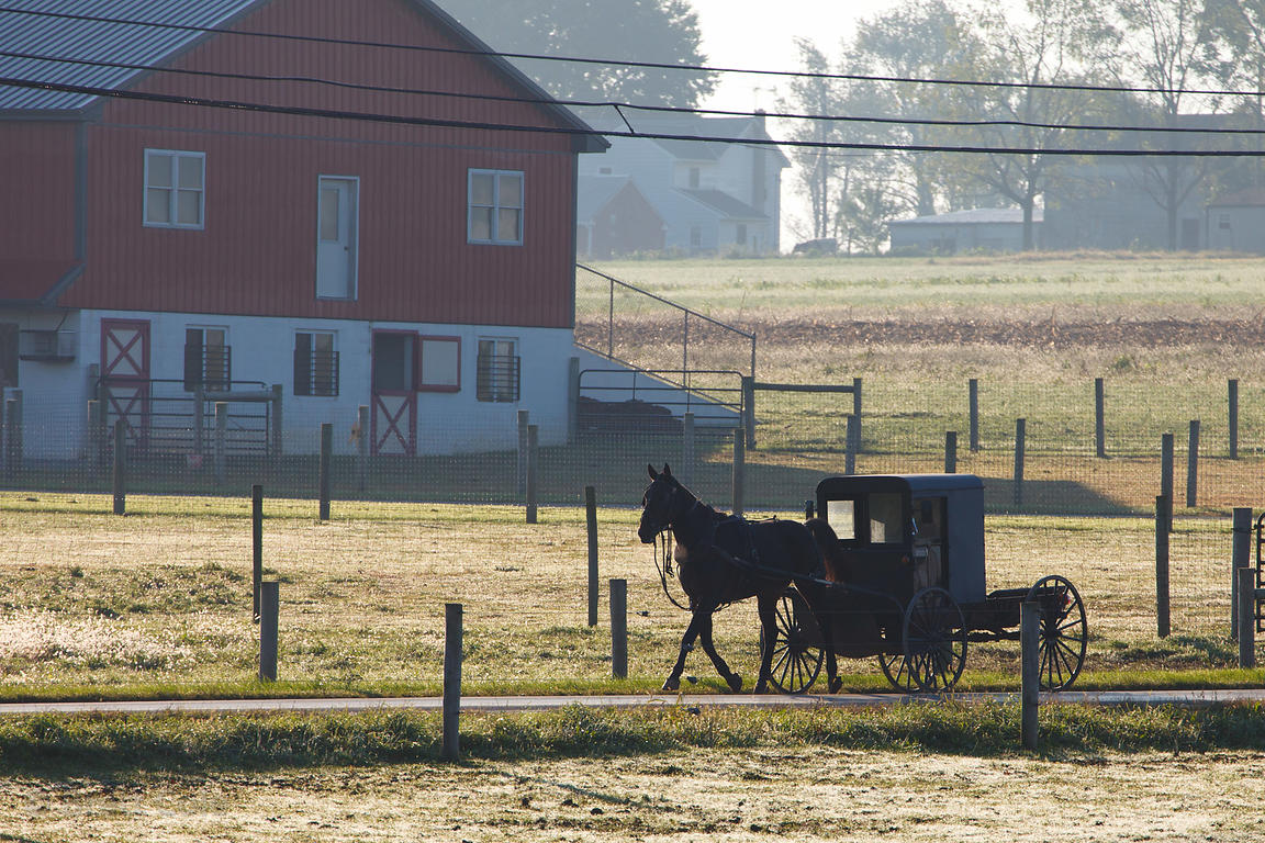 Horse-drawn carriage on a rural road in early morning, Amish country, Lancaster, Pennsylvania