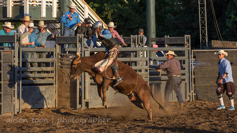 Stars and Stripes Bull Riding