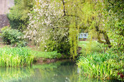 Weeping willow and blossom hang over still pools in the Bishop's Palace Garden, Wells, Somerset in April
