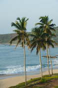 Palm-lined beach , Biriwa, Ghana