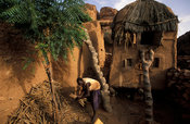 man storing millet in granary, Songo, Dogon Country, Mali