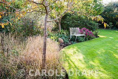 Afternoon sun casts shadows across a lawn near a white bench set into an autumn border planted with grasses and sedum. Privat...