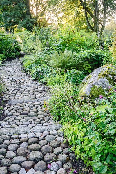A path of cobbles and stone edged with epidmedium leads through the woodland garden planted with hellebores, ferns, Solomon's...