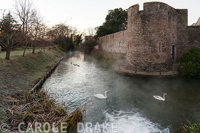 Swans swim in the moat of the Bishop's Palace in Wells on a frosty November morning