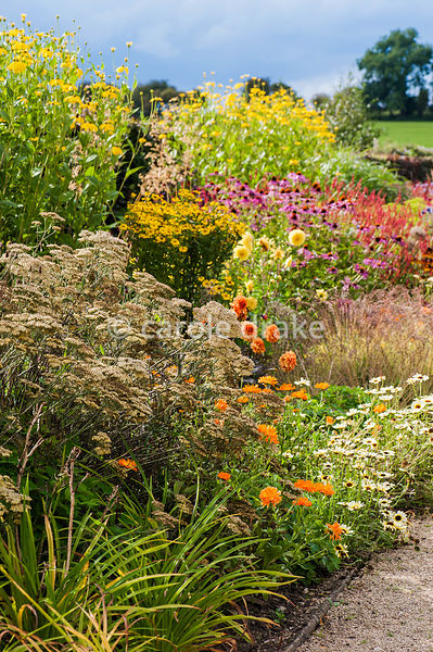 Section of the hot borders planted with Achillea 'Terracotta', annual marigolds, Chrysanthemum segetum 'Eastern Star', echina...