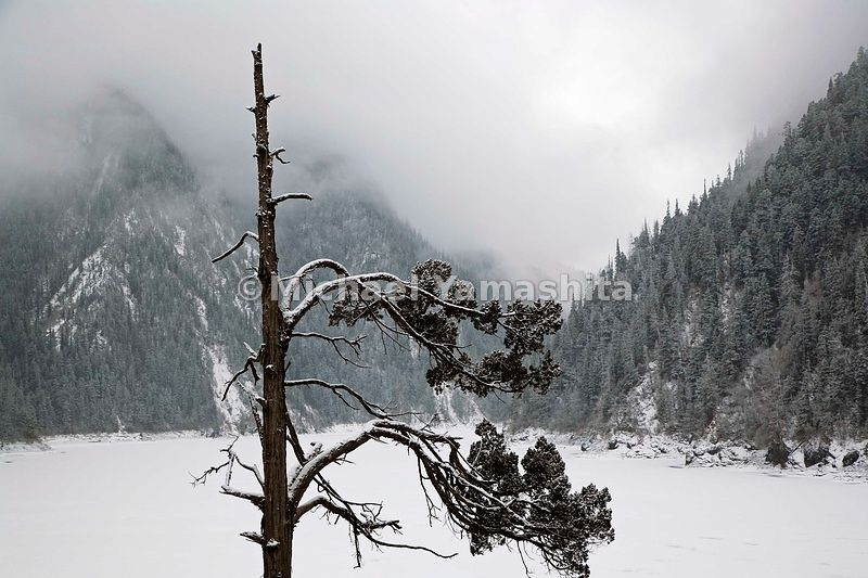 Dusted in winter white, a timeworn cypress looms over Long Lake, some 10,000 feet up in the Min Mountains.............