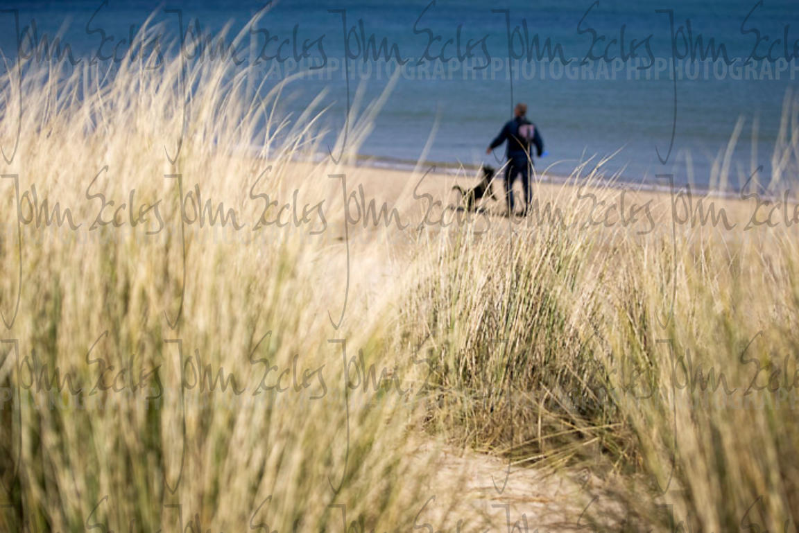 Person and dog on beach