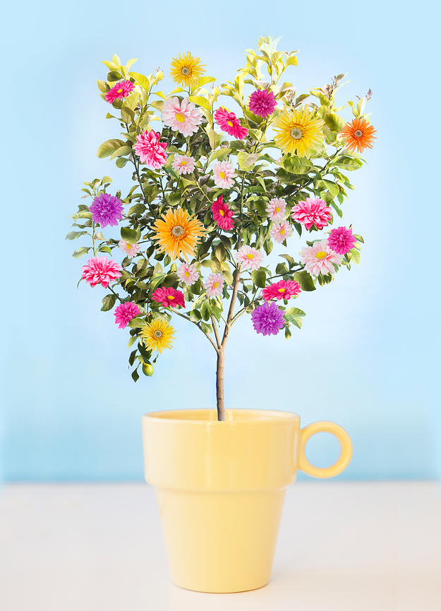 Coffee Cup with flower tree