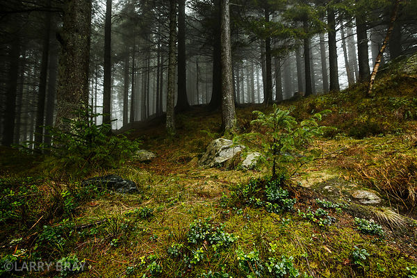 Woodland in Bergen, Norway