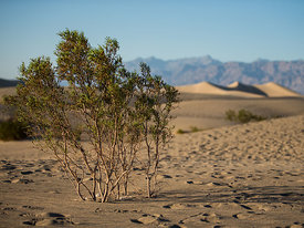 Death_Valley_2012_229