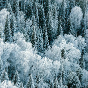 Russia. The Sayan Mountains. Winter forest.