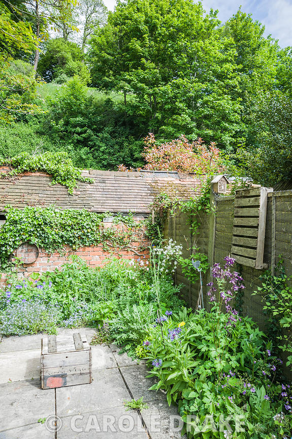 Brigit Strawbridge's tiny bee friendly courtyard garden in St James', Shaftesbury, planted with wildlife in mind, particularly bumble and solitary bees. Insect friendly plants include centaurea, aquilegias, forget-me-nots, ivy and hardy geraniums.