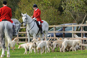 Huntsman and hounds at the meet