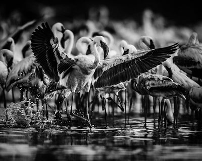 40468-Bird_Laurent_Baheux