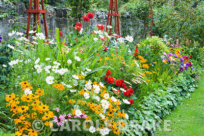 Decorative border punctuated by red wooden obelisks featuring brightly coloured dahlias, Rudbeckia 'Marmalade', Aster 'Ostric...