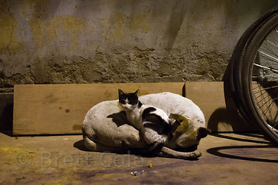 An inseparable stray dog and cat in the Lake Gardens neighborhood of Kolkata, India. The two spend every day and night together.