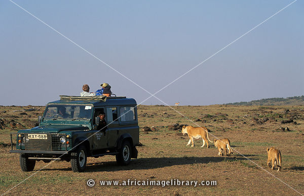 Tourists watching Lions, panthera leo, Maasai Mara National Reserve, Kenya
