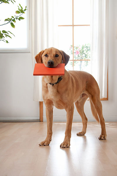 Dog holds orange book in mouth