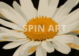 SPIN ART Botanical