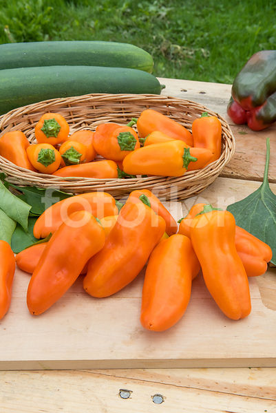 Capsicum annuum 'Snackor', poivron, orange