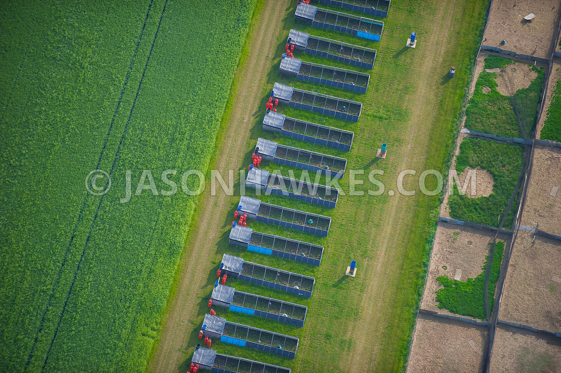Aerial view of farming , agriculture.