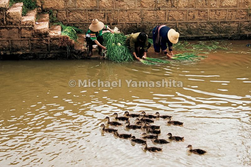 Zheng He, growing up among people like these villagers washing vegetables in an irrigation canal, did not seem destined for f...