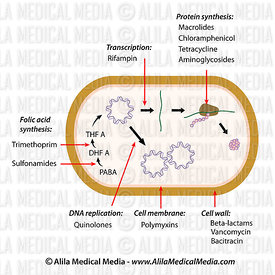 Medical Microbiology & Pathology Images & Videos