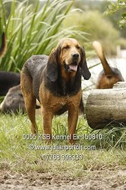 2010-08-15 Kennels Hound Exercise