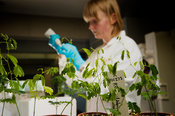 Plant research at Millennium Seed Bank laboratories -