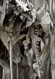 banana_leaves_2_grey