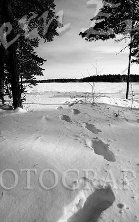 In_Giant_Footsteps_b_w