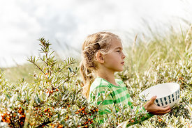 Girl picking sea buckthorn in Thy, Denmark 4