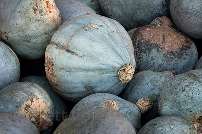 Locally grown gourds for sale at a wholesale market in Amish country, Lancaster, Pennsylvania