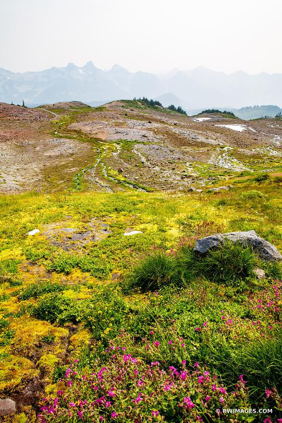 ALPINE MEADOW SUMMER WILDFLOWERS MOUNT RAINIER NATIONAL PARK WASHINGTON COLOR VERTICAL