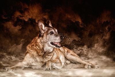 Art-Digital-Alain-Thimmesch-Chien-847