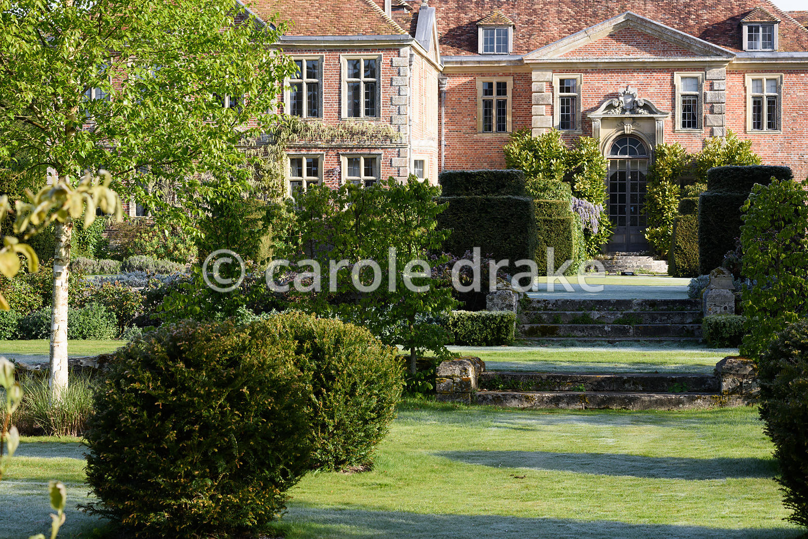 Formal garden around Heale House, Middle Woodford, Wiltshire with clipped yews, white stemmed birches and beds of miscanthus