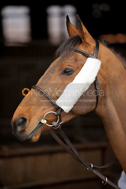 Bridle with Sheepskin Cheek Pieces - Royalty Free Image