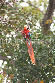 macaw_on_branch