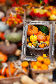 Pumpkin in a Frame
