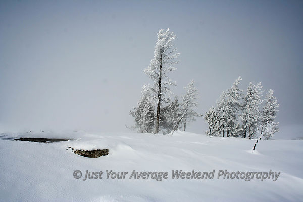 Yellowstone Winter 4