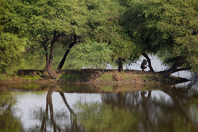 Photographer in wetlands at Keoladeo National Park, Bharatpur, India