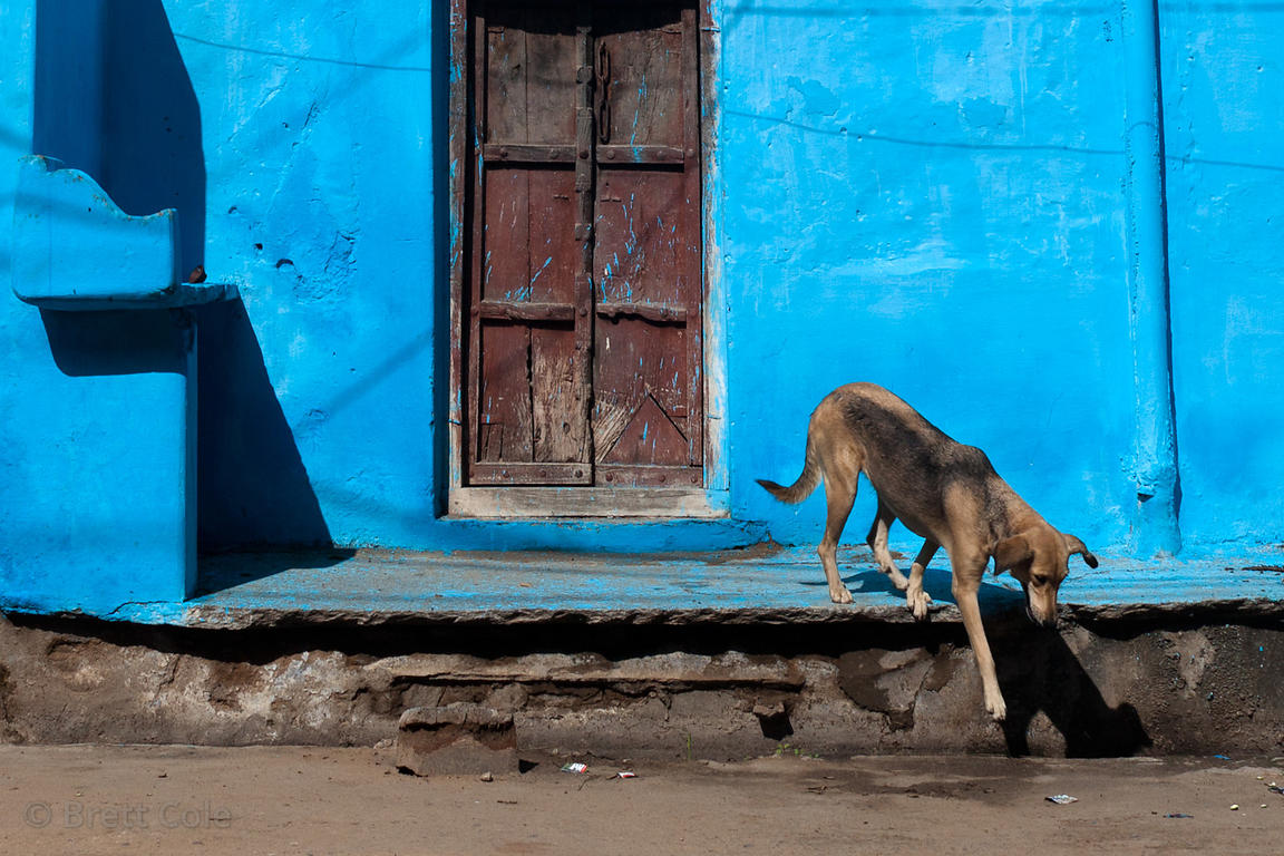 Dog in front of a blue house in Pushkar, Rajasthan, India