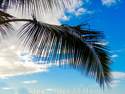 Palm tree branch silhouetted against a blue sky