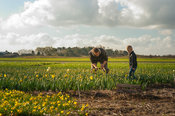 Father and son at work on the flower fields series 5of7
