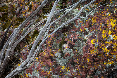 Gorgeous variety of lichen on a boulder, Tule Lake NWR, California